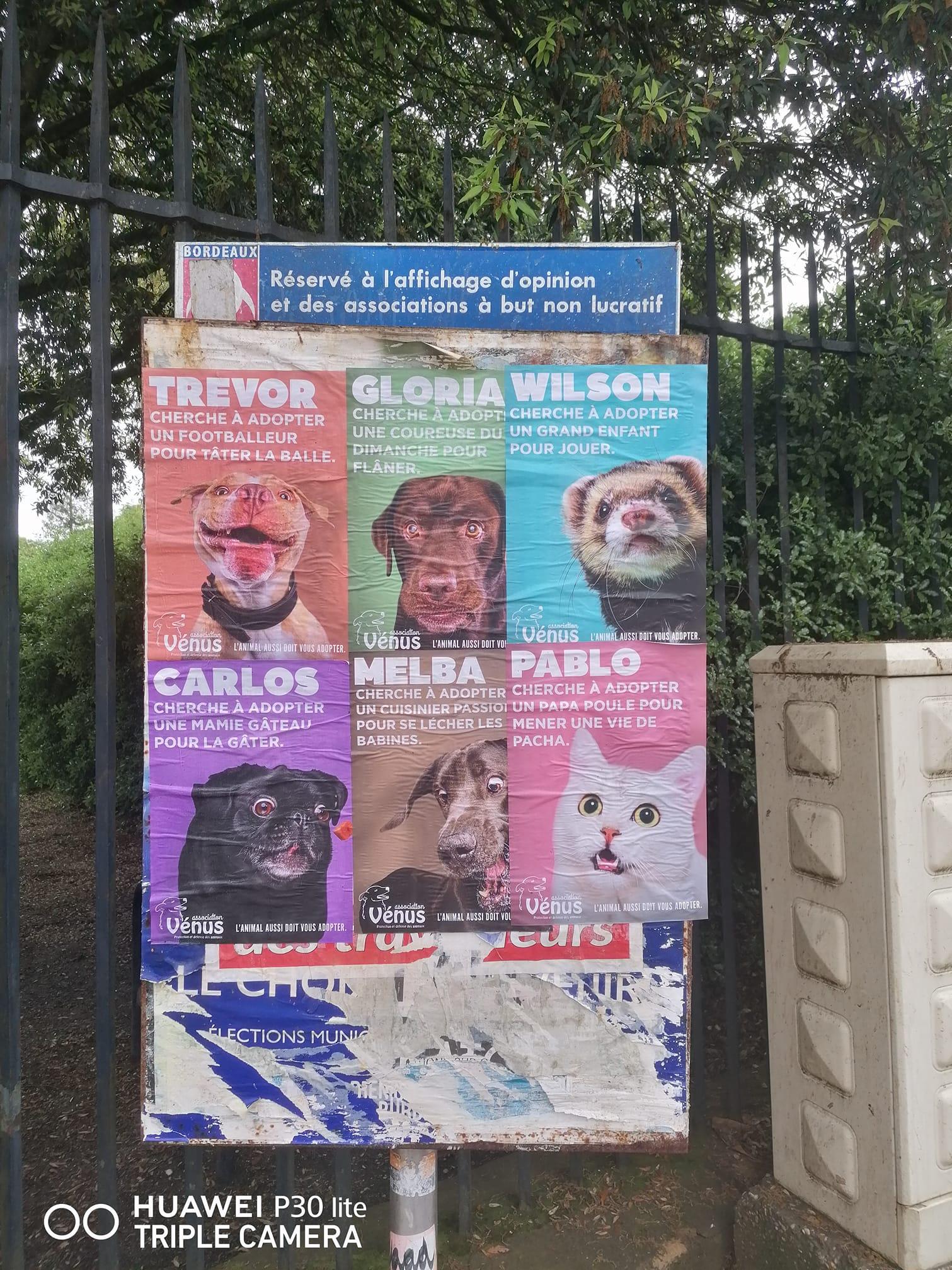 Affichage de la campagne réalisée par les étudiants de l'ESP Bordeaux pour l'Association Vénus